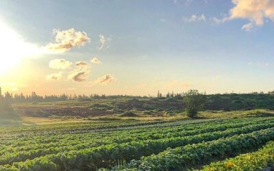 Forever Green Farm